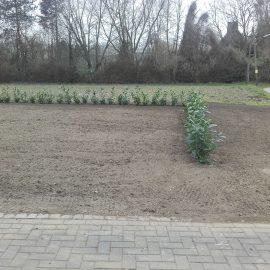 Neuanlage einer Rasenfläche und Pflanzung einer Sichtschutzhecke